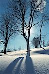 winter bare tree by bright sunny day Stock Photo - Royalty-Free, Artist: yuriz                         , Code: 400-06424703
