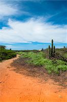 earth no people - Scenic with Path and Cactus, North Coast of Aruba, Lesser Antilles, Caribbean Stock Photo - Premium Royalty-Freenull, Code: 600-06431260