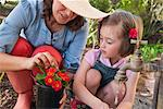 Mother and daughter gardening together Stock Photo - Premium Royalty-Freenull, Code: 649-06432657