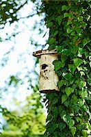 Birdhouse on ivy tree in backyard Stock Photo - Premium Royalty-Freenull, Code: 649-06432787