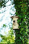 Birdhouse on ivy tree in backyard Stock Photo - Premium Royalty-Free, Artist: Blend Images, Code: 649-06432787