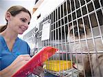 Veterinarian examining cat in kennel Stock Photo - Premium Royalty-Free, Artist: Blend Images, Code: 649-06433003