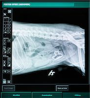 dog x-ray - X-ray of dog with swallowed plastic duck Stock Photo - Premium Royalty-Freenull, Code: 649-06433010