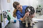 Veterinarian examining dog in office Stock Photo - Premium Royalty-Freenull, Code: 649-06433029