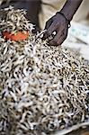 Maasai man picking up a handful of Kapenta fish Stock Photo - Premium Royalty-Free, Artist: Westend61, Code: 649-06433221
