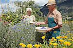 Older people picking flowers in field Stock Photo - Premium Royalty-Free, Artist: Robert Harding Images, Code: 649-06433416
