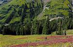 Man riding famed 401 Trail in Crested Butte Stock Photo - Premium Royalty-Free, Artist: Cultura RM, Code: 6106-06434107