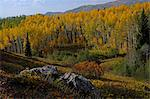 fall colors in Colorado Rocky Mountains Stock Photo - Premium Royalty-Freenull, Code: 6106-06434653