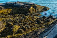 Low tide along Maine's Down East coast Stock Photo - Premium Royalty-Freenull, Code: 6106-06434670