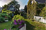 Garden, Provincetown, Cape Cod, Massachusetts, USA Stock Photo - Premium Rights-Managed, Artist: Alberto Biscaro, Code: 700-06439119