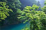 River and green leaves in Dakigaeri Valley, Akita Prefecture Stock Photo - Premium Royalty-Free, Artist: JTB Photo, Code: 622-06439549