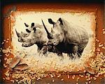 Rhinoceros Stock Photo - Premium Rights-Managed, Artist: GreatStock, Code: 873-06440162