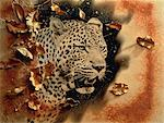 Leopard Stock Photo - Premium Rights-Managed, Artist: GreatStock, Code: 873-06440258