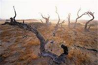 Dead Trees Purros, Namibia, Africa Stock Photo - Premium Rights-Managednull, Code: 873-06440538