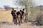 Rear-View of Bushman Hunters Near Trees Namibia, Africa Stock Photo - Premium Rights-Managed, Artist: GreatStock, Code: 873-06440570