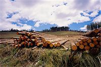Pile of Logs Sedgefield, Western Cape South Africa Stock Photo - Premium Rights-Managednull, Code: 873-06440587