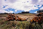 Pile of Logs Sedgefield, Western Cape South Africa Stock Photo - Premium Rights-Managed, Artist: GreatStock, Code: 873-06440587