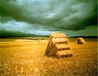 Hay Bales in Landscape South Africa Stock Photo - Premium Rights-Managednull, Code: 873-06440772