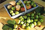 Basket of fresh apples and pears Stock Photo - Premium Royalty-Free, Artist: Yvonne Duivenvoorden, Code: 614-06443085