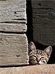 Kitten peeking over wall Stock Photo - Premium Royalty-Free, Artist: CulturaRM, Code: 698-06443907