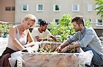 Young couple gardening at urban garden with man in the background Stock Photo - Premium Royalty-Free, Artist: Blend Images, Code: 698-06444218