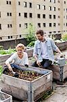 Young Caucasian couple examining plants at urban garden Stock Photo - Premium Royalty-Free, Artist: Blend Images, Code: 698-06444227