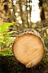 Close-up of timber in forest Stock Photo - Premium Royalty-Free, Artist: Ascent Xmedia, Code: 698-06444266
