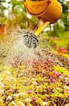 Spraying water on plants at park Stock Photo - Premium Royalty-Free, Artist: Blend Images, Code: 698-06444284