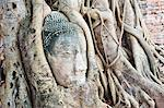 Large stone Buddha head in fig tree roots, Wat Mahathat, Ayutthaya City, UNESCO World Heritage Site, Thailand, Southeast Asia, Asia Stock Photo - Premium Rights-Managed, Artist: Robert Harding Images, Code: 841-06445008