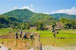 Lahu tribe people planting rice in rice paddy fields, Chiang Rai, Thailand, Southeast Asia, Asia Stock Photo - Premium Rights-Managed, Artist: Robert Harding Images, Code: 841-06445025