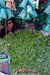 A stall with piles of fresh mint for sale in the main square, (Jemaa El Fna), Marrakech, Morocco, North Africa, Africa Stock Photo - Premium Rights-Managed, Artist: Robert Harding Images, Code: 841-06445529