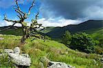 Woundale, Lake District National Park, Cumbria, England, United Kingdom, Europe Stock Photo - Premium Rights-Managed, Artist: Robert Harding Images, Code: 841-06445790