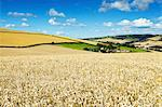 Summer Fields, Thorverton, Devon, England, United Kingdom, Europe Stock Photo - Premium Rights-Managed, Artist: Robert Harding Images, Code: 841-06445847