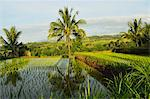 Rice fields, Senaru, Lombok, Indonesia, Southeast Asia, Asia Stock Photo - Premium Rights-Managed, Artist: Robert Harding Images, Code: 841-06446641