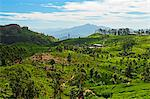 View of tea plantations from Lipton's Seat, Haputale, Sri Lanka, Asia Stock Photo - Premium Rights-Managed, Artist: Robert Harding Images, Code: 841-06446725