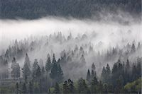 fog (weather) - Fog mingling with evergreen trees, Yellowstone National Park, UNESCO World Heritage Site, Wyoming, United States of America, North America Stock Photo - Premium Rights-Managednull, Code: 841-06446866