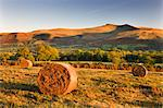 Bracken bales on Mynydd Illtud Common, looking towards Corn Du and Pen y Fan in the Brecon Beacons, Wales, United Kingdom, Europe Stock Photo - Premium Rights-Managed, Artist: Robert Harding Images, Code: 841-06447439