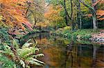 The River Teign surrounded by autumnal foliage, near Fingle Bridge in Dartmoor National Park, Devon, England, United Kingdom, Europe