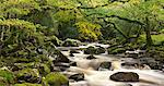 River Plym flowing through Dewerstone Wood, Dartmoor, Devon, England, United Kingdom, Europe Stock Photo - Premium Rights-Managed, Artist: Robert Harding Images, Code: 841-06447526