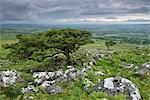 Hawthorn trees on Cox Tor in summer, Dartmoor, Devon, England, United Kingdom, Europe Stock Photo - Premium Rights-Managed, Artist: Robert Harding Images, Code: 841-06447604