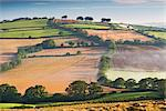 Rolling countryside on a misty morning, mid Devon, England, United Kingdom, Europe Stock Photo - Premium Rights-Managed, Artist: Robert Harding Images, Code: 841-06447622