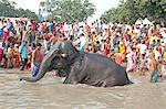 Elephant being washed by mahout near the banks of the River Ganges crowded with visitors to the Sonepur Cattle Fair, Bihar, India, Asia Stock Photo - Premium Rights-Managed, Artist: Robert Harding Images, Code: 841-06447658