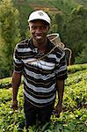 Farmer Lincoln Kimanthi Mugo picking tea, Kathangiri, Kenya, East Africa, Africa Stock Photo - Premium Rights-Managed, Artist: Robert Harding Images, Code: 841-06448161