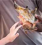 Girl touching the mollusc emerging from a conch, Conch farm, Providenciales, Caicos, Turks and Caicos Islands, West Indies, Caribbean, Central America Stock Photo - Premium Rights-Managed, Artist: Robert Harding Images, Code: 841-06448719
