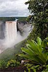 Giant Tank Bromeliad (Brocchinia micrantha) with Kaieteur Falls in the background, Kaieteur National Park, Guyana, South America Stock Photo - Premium Rights-Managed, Artist: Robert Harding Images, Code: 841-06449862