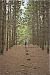 Boy Walking on Path in Forest, Newmarket, Ontario, Canada Stock Photo - Premium Royalty-Free, Artist: Mark Peter Drolet, Code: 600-06452046