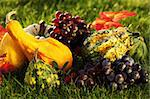 Harvest - pumpkins and grapes in the grass for Thanksgiving Stock Photo - Royalty-Free, Artist: Brebca                        , Code: 400-06457278