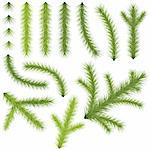 Coniferous Branches Set - Illustrations, Vector Stock Photo - Royalty-Free, Artist: derocz                        , Code: 400-06463207