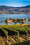 Vineyard Overlooking Lake and Houses, Kelowna, Okanagan Valley, British Columbia, Canada Stock Photo - Premium Rights-Managed, Artist: R. Ian Lloyd, Code: 700-06465406