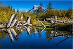 Tree Stumps in Vermilion Lakes with Mount Rundle in Background, near Banff, Banff National Park, Alberta, Canada Stock Photo - Premium Rights-Managed, Artist: R. Ian Lloyd, Code: 700-06465457